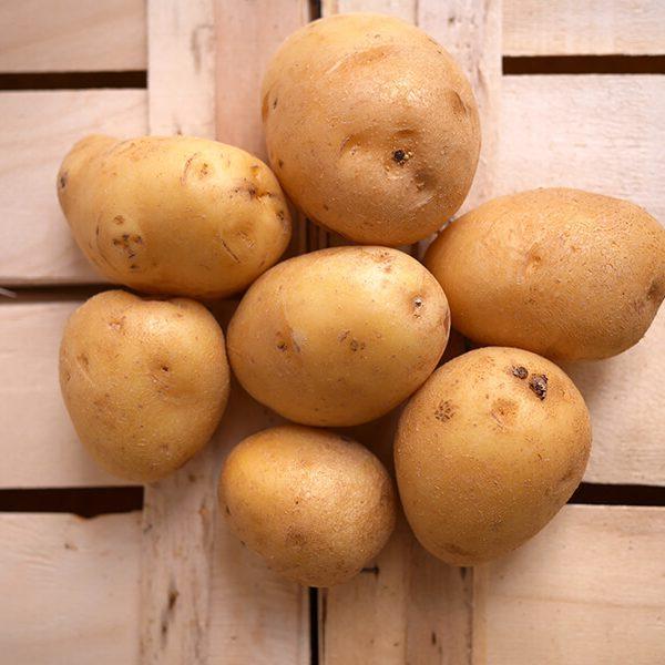 Pommes de terre Agata