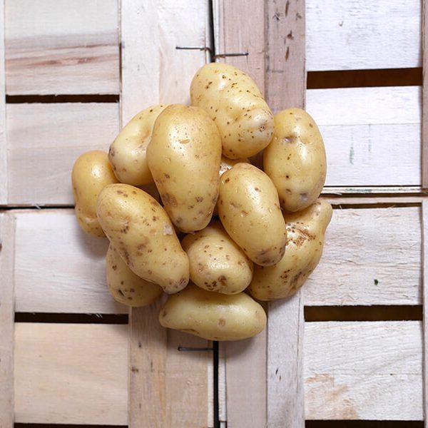 Pommes de terre Delicatesse moyenne